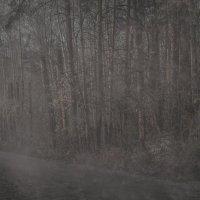 Мрачный лес :: Степан Сопегин