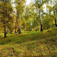 В старом городском парке... :: Александр Попов