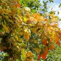 Осень в масле :: Alexander Andronik