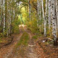 Дорога в осень :: Natali8163 *