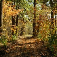 Осенний листопад :: Natali8163 *