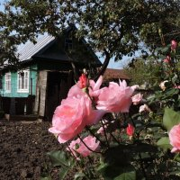 Поздние розы :: Ната Волга