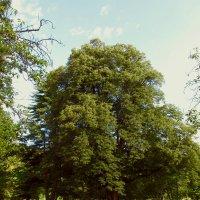 Также славится парк своими деревьями долгожителями и великанами. :: НаталиЯ ***