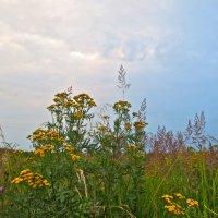 травы полевые :: Елена