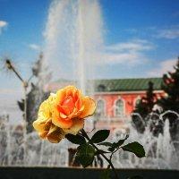 Роза :: Александр Тулупов
