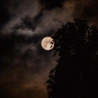 Луна :: Ольга Осипова