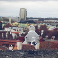 Таллинн :: Katrin Panova