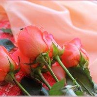Нежность роз :: Лидия (naum.lidiya)