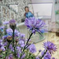 Цветут под окном сентябрины, Цветут, не боясь холодов... :: Маргарита Лапина