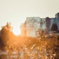 autumn :: Kristina Usanova