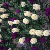 Цветы :: Kameliia Хадлер