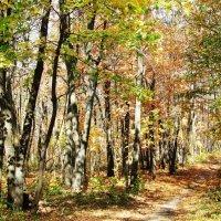 Полдень в осеннем лесу :: Татьяна Овчинникова
