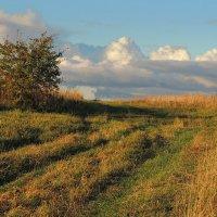 Вот и осень перед нами: Сжато поле, скошен луг. :: Павлова Татьяна Павлова