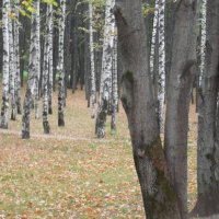 Осень :: Мила
