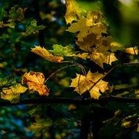 Жизнь осенних листьев :: Елена Ворошина