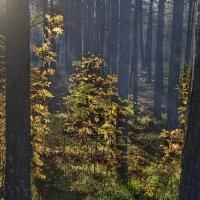 В осеннем лесу :: Игорь Чубаров