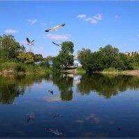 Полёты над прудом. :: Anatol Livtsov