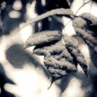 Первый снег :: Хась Сибирский
