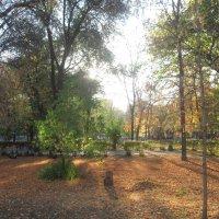 Осень в парке :: Алексей Аржаков
