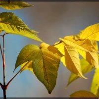 просто листья :: victor leinonen