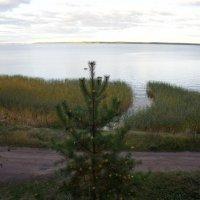 Выборгский залив :: Елена Павлова (Смолова)