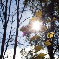 Солнце :: Ирина Гиль