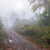 Сквозь туман :: Любовь Потеряхина