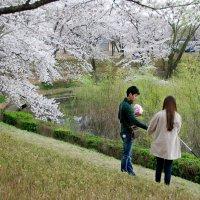 Цветение сакуры в Кёнджу :: Tatiana Belyatskaya
