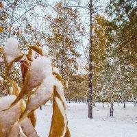 первый снег :: Иван