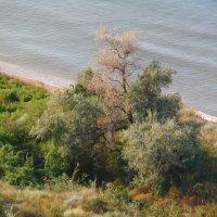 Азовское побережье :: Нади часоК