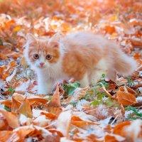 Рыжик и осень :: Анжелика Веретенникова