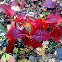 красный -тоже цвет осени :: Александр Прокудин