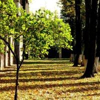 молодое дерево забыло про осень... :: Александр Прокудин