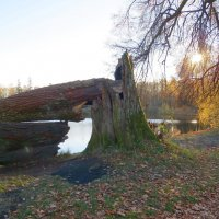 Последняя осень гиганта :: Вера Щукина