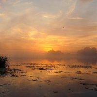 Позолочен рассветный туман. :: Дмитрий Постников