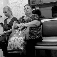 Дама с собачками :: Elen Dol