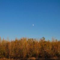 луна над лесом :: Ежи Сваровский
