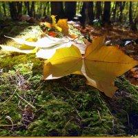 В осеннем лесу :: Андрей Заломленков