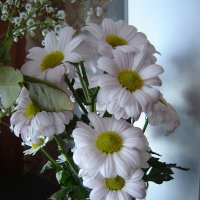 Много – много красивых цветов. :: Анна Приходько