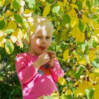 Райские яблочки :: Ирина Ильиных