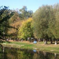 У озера, в конце сентября :: Елена Семигина