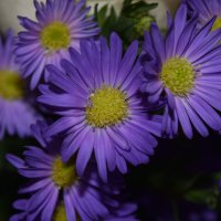 цветы :: Анастасия Сосковец