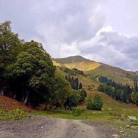 Альпийские луга :: Tata Wolf