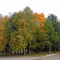 Осень :: ivolga