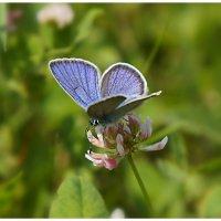 А бабочка крылышками.... :: Любовь Чунарёва