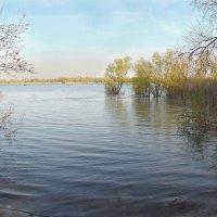 Весенний паводок на Дону :: Владимир