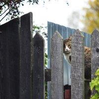 грусть кошачья :: ганичев алексей