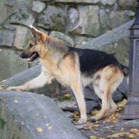 Собаки -4. :: Руслан Грицунь
