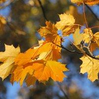 ....тихо льется с клёнов листьев медь.... :: Tatiana Markova