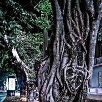 деревья на Rothschild street. Tel Aviv. :: maxim polak